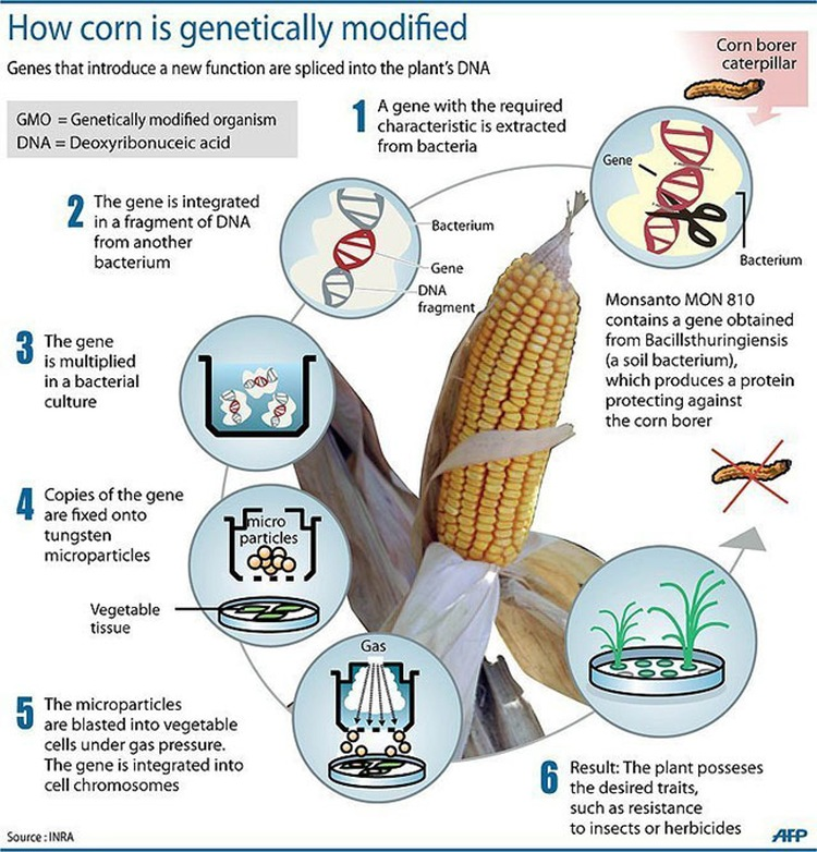 the abyss of pesticides and genetically modified organisms Nearly 90 percent of all the crops grown in the united states have been touched by science genetically modified organisms, or gmos, are plants that have had.
